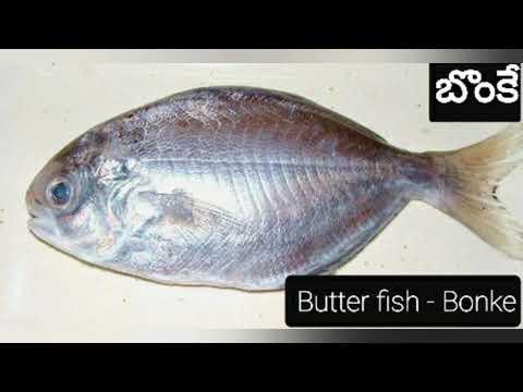 Fish Names| Chepala Perlu | Telugu To English Fish Names || Different Fish Names || BZone
