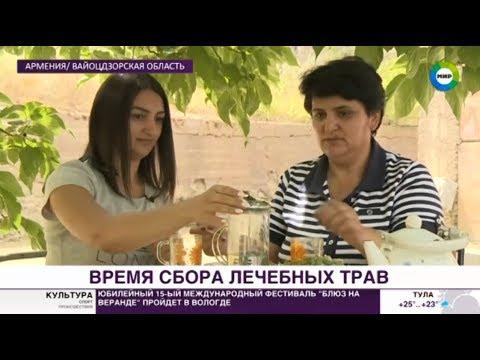 «Антистресс» для горожан: армянские травы полюбили в России