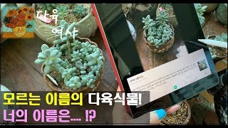 처음보는 다육식물.. 너의 이름은... ?! by smart lense