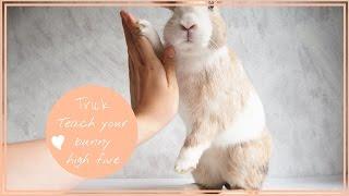 Teach your bunny high five