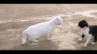 приколы укуреные коты