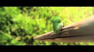 Rölli ja kultainen avain - Mauno Mato musiikkivideo