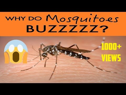 why-do-mosquitoes-buzz-in-ear-at-night-😳-?-remedy-3-tips-get-rid-of-mosquitoes