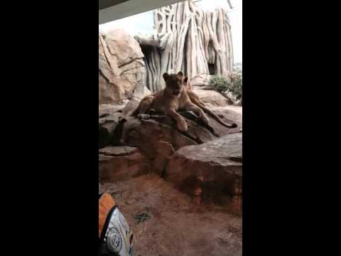Morgandale Elementary School field trip to the Milwaukee County Zoo part 6 of 6