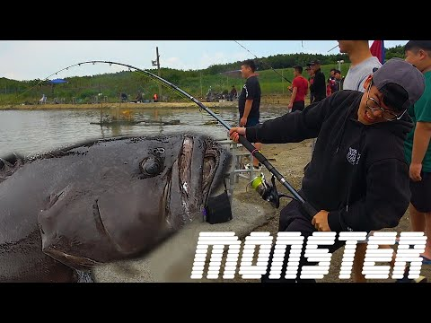 Fighting with Goliath Grouper Monster! Career record!Is it possible fishing it with 30 dollars rod?