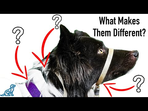 Which Dog Training Collar Is Right For YOUR Dog?