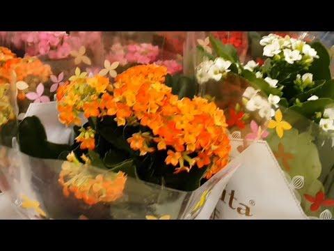 Цветы в магазине Ашан Flowers In  Shop Auchan