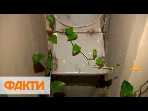 Вопрос: Вы видели когда-нибудь крысу в мусоропроводе?