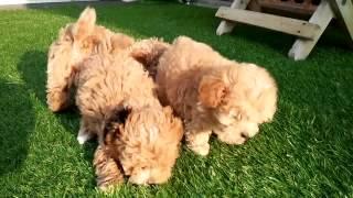 子犬販売・ペット保険・トリミング・無添加ドックフード・ ペットサロン...