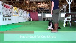 Bronze Obedience Overview