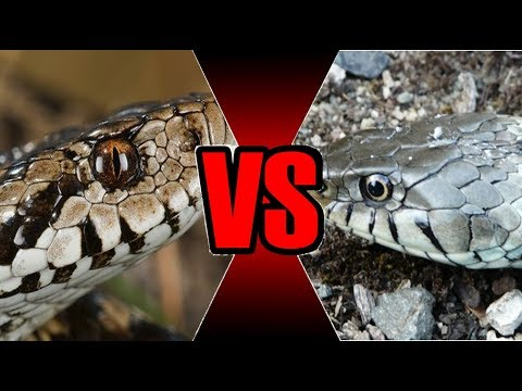 Couleuvre ou Vipère ? Les serpents français
