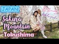Japan Vlog #16: KONOYAMA SAKURA MOUNTAIN PARK | Tokushima | Honey in JAPAN  | Spring 2018