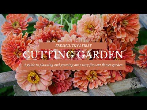 MY FIRST CUT FLOWER GARDEN: Flower Suggestions and Tips for a SUCCESSFUL First Cut Flower Garden