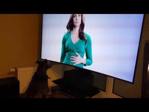 A veure si no fan les televisions amb tanta definició, que fins els gossos les confonen amb finestres ...