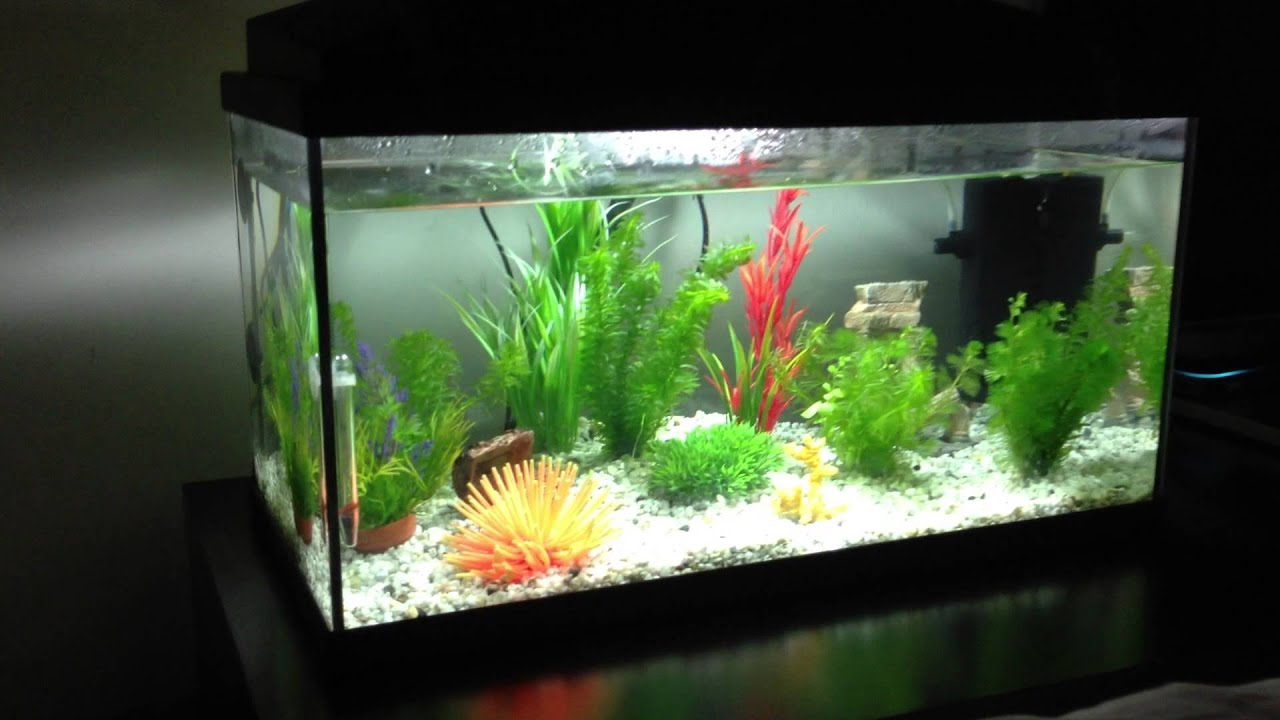 New fishtank - 50 liter aquarium - YouTube