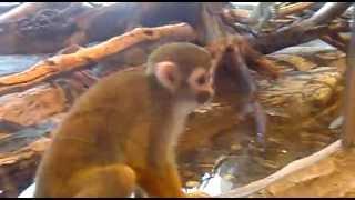 обезьяны смотреть онлайн бесплатно