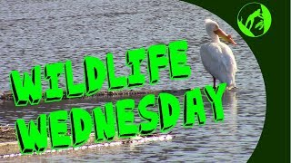 Wildlife Wednesday Collaboration - Wildlife in our Area