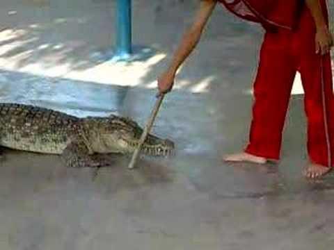 xjếc cá sấu 2
