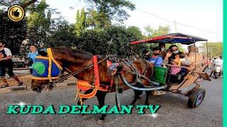🐎 KUDA DELMAN TV 🔴 Kuda Delman Istimewah   حصان باركور   Horse   Riding   Kuda BKT