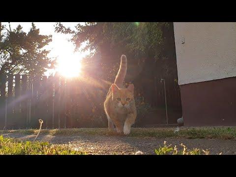 Relaxing Cat Video 61