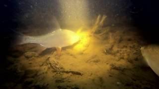 Подводная охота 3 Ноября Сильный ветер снег и много рыбы