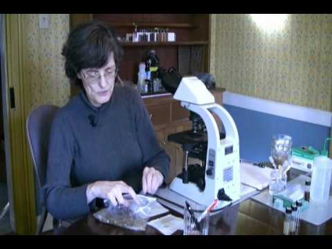 PREPARE A SOIL SAMPLE  (part 1) - INTRODUCTION TO SOIL MICROBIOLOGY by Dr. Elaine Ingham