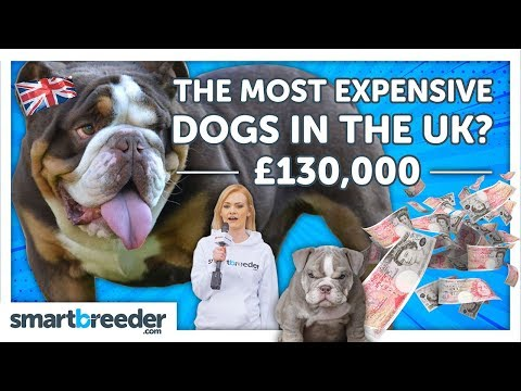 The Most Expensive Dogs In The UK !? 🇬🇧£130,000 💰