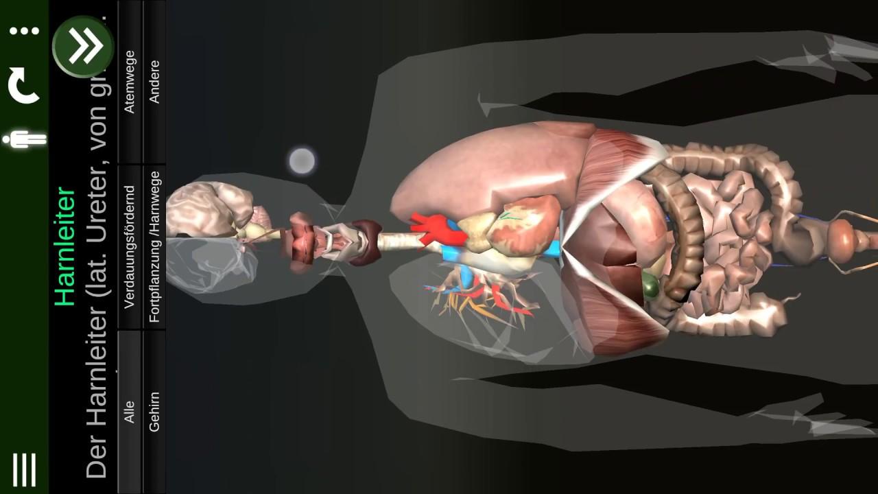 Inneren Organe 3D (Anatomie) v2 für Android. \