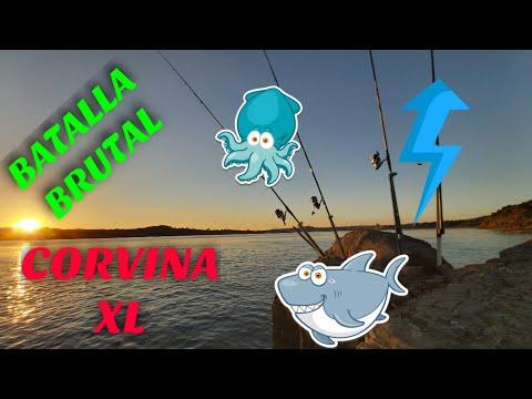 🟢🔵Buscando CORVINAS XL