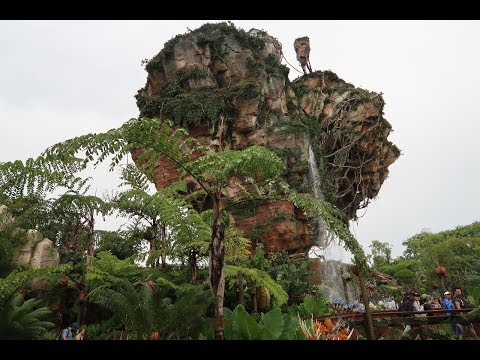The Rain Can't Hold Us At Disney's Animal Kingdom