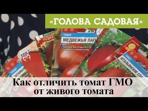 Голова садовая Как отличить томат ГМО от живого томата