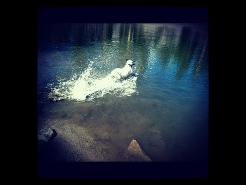 Mammoth Lakes CA 7/5/12 FEAT Howie swimming in a lake!!