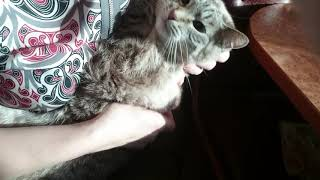 Как дать кошке таблетку.  Лечение мочекаменной болезни у кошки. Стоп цистит таблетки для кошек.
