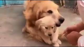 Cute doggy won't let me touch her puppy