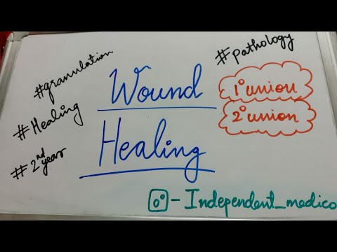 Download Wound Healing|Pathology|second year topic|Granulation tissue|healing by primary and secondary union|
