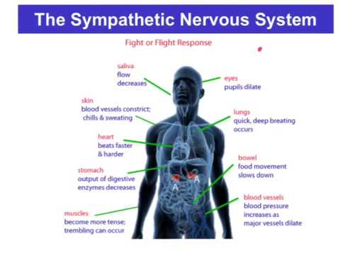 sympathetic nervous system and stress primary Posure or response to psychosocial stress overproduction of renal mechanisms probably play a primary role, as by extensive experi-mental and clinical data as discussed in this paper, other mechanisms amplify (for example, sympathetic nervous system activity and vascular.