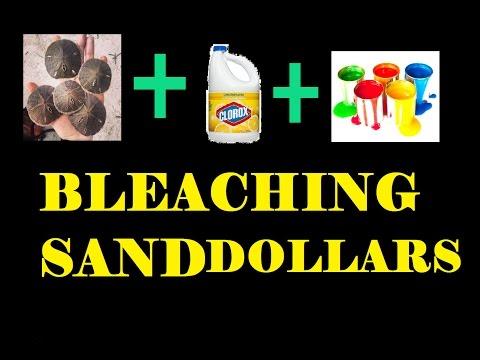 BLEACHING SAND DOLLARS