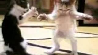 Güzel oynayan kediler
