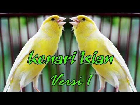 Download Suara Burung Kenari Isian Versi 1