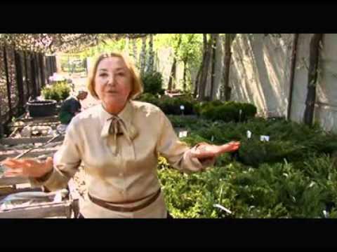 видео: Растения для альпийских горок