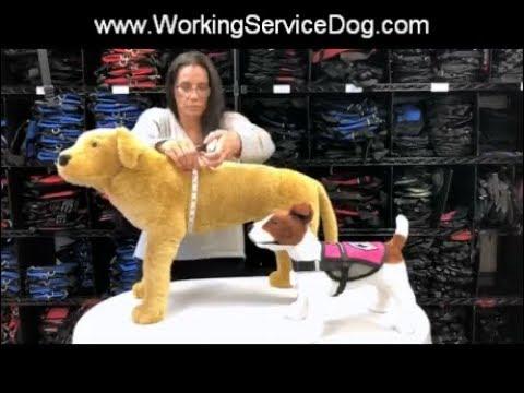 Measuring Your Dog For A Service Dog Vest, Emotional Support Dog Vest Or Therapy Dog Vest