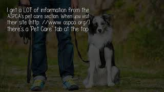 What Is A Good Portal For Information On Dogs Including Training Health And Products?