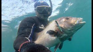 Spearfishing Indian Ocean December 2019 Подводная охота Гоа декабрь 2019
