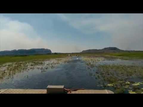 Lily Laden Flood Plains - Mt Borradaile