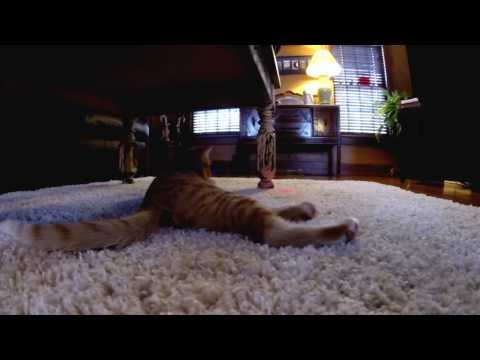 Carl: The Laser Chasing, High Jumping Cat