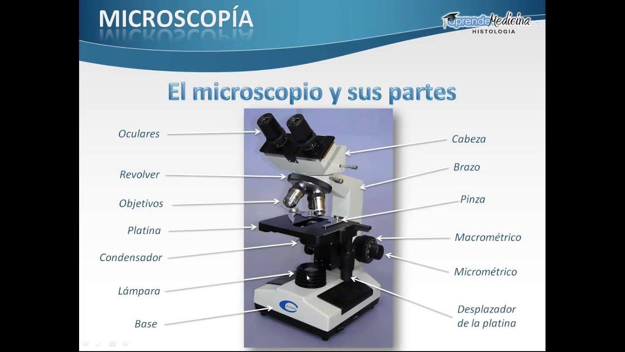 El microscopio y sus partes  YouTube