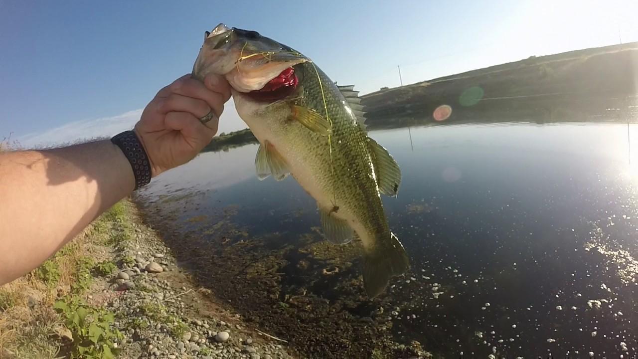 Bass fishing fresno ca youtube for California bass fishing