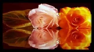 Eshqe Man Iranic Song Naser Sadr