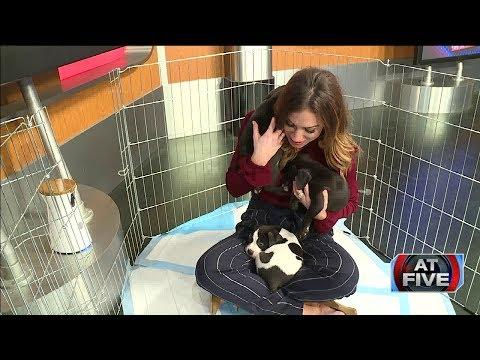 Fox 8 News | Natalie Puppy Love