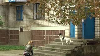 В Орджоникидзе бойцовский пес терроризирует жителей(Источник: http://34.ua/, 2013-09-19T09:16:31.000Z)